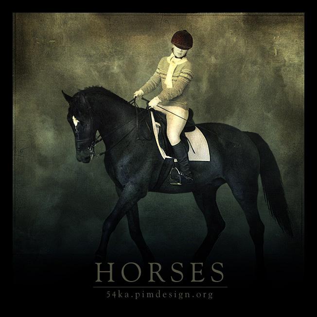 Horses photography photomanipulation equine photography animals  Photo