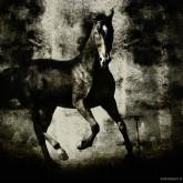 Horses III