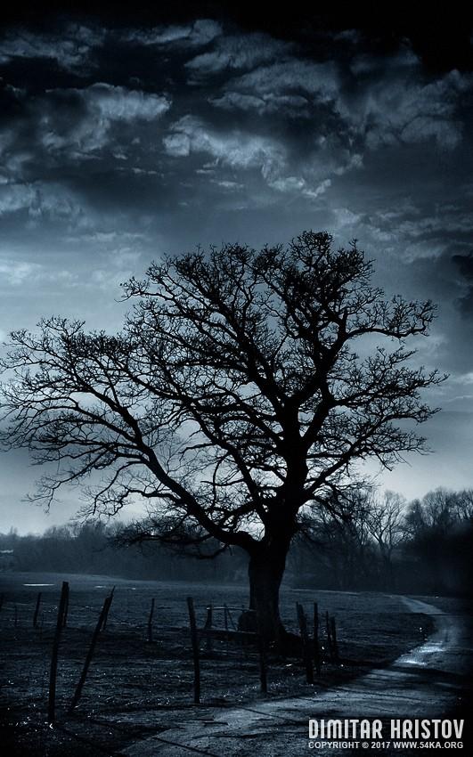 Treestory photography photomanipulation landscapes  Photo