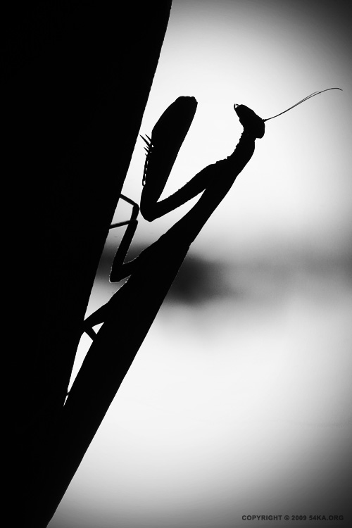 Predator photography macro animals  Photo