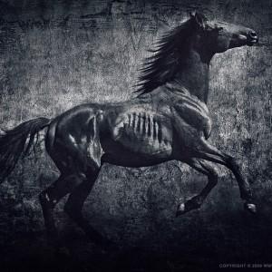 Horses VII