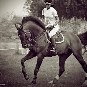 Horse Rider Women XI