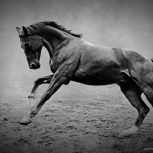 The Black Horse