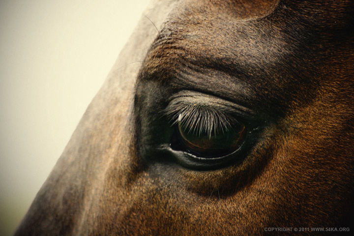 horse eye by 54ka :: Horse eye :: photography index animals