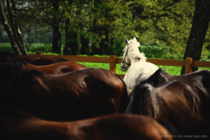 Grazing photography featured equine photography animals  Photo