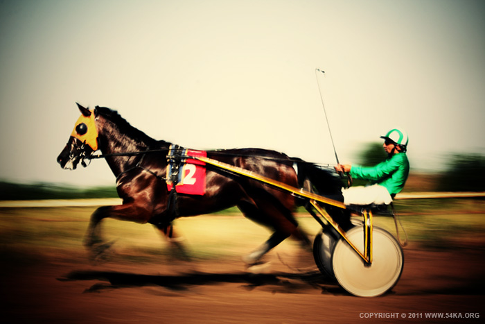 Traditional buggy race photography animals  Photo