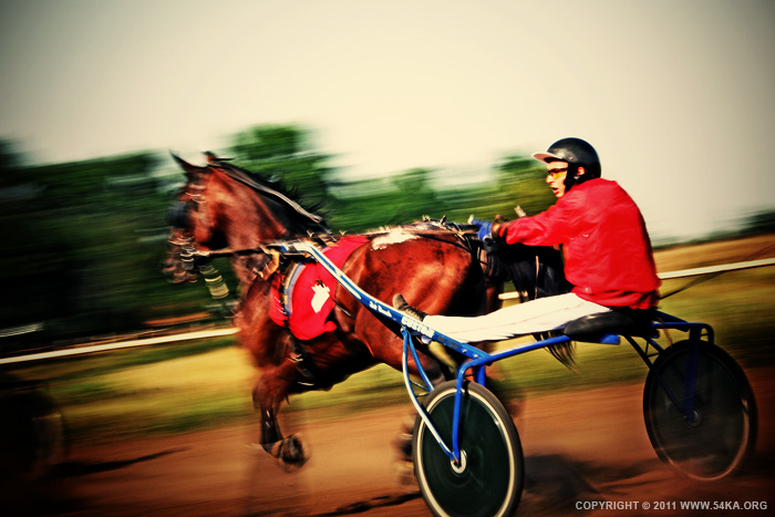 Traditional buggy race II photography equine photography animals  Photo
