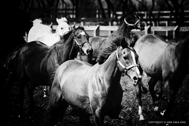 Horses Black and White photography best of animals  Photo