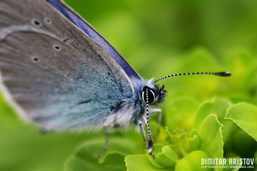 butterfly 001 by 54ka :: Butterfly II :: photography macro index top index animals