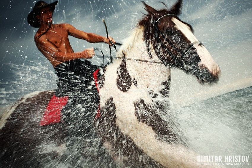 The Storm II photography featured equine photography animals  Photo
