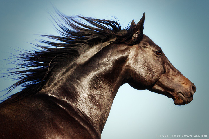 Horse Beauty photography animals  Photo