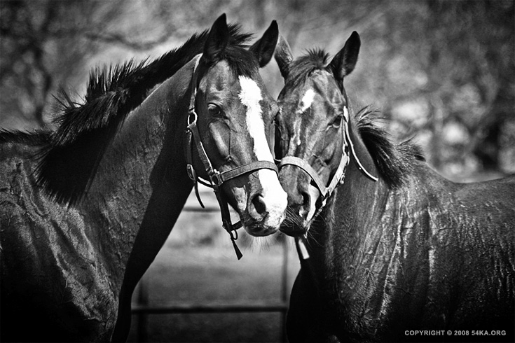 Horse Love photography animals  Photo