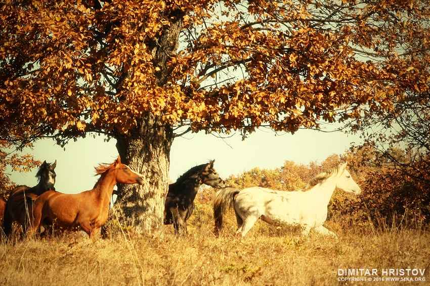 Autumn Horses II photography best of animals  Photo