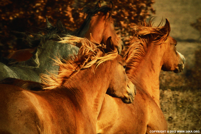 Autumn Horses photography featured equine photography animals  Photo