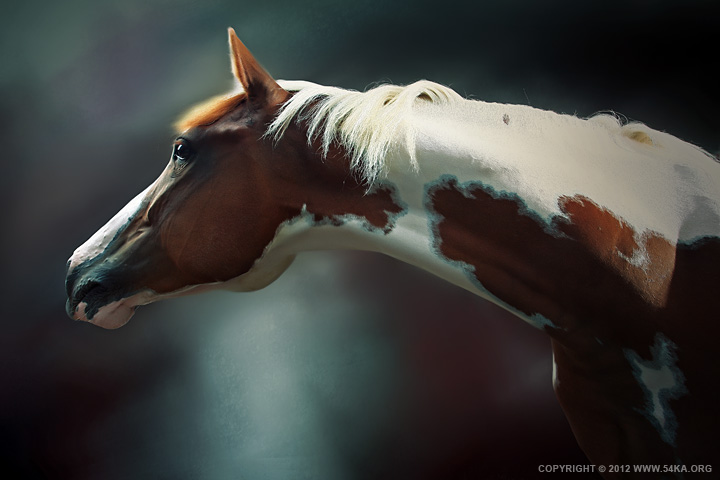 Horse Portrait 01 by 54ka :: Horse Portrait :: photography index animals