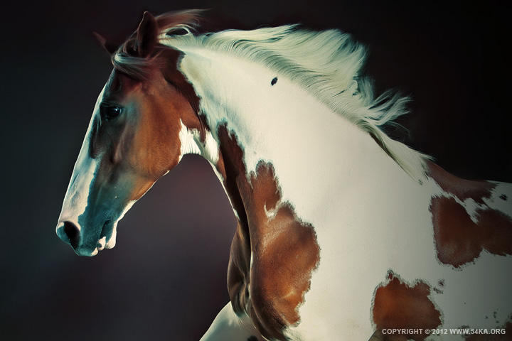 Horse Portrait II 01 by 54ka :: Horse Portrait II :: photography animals