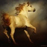 Majestic Horse