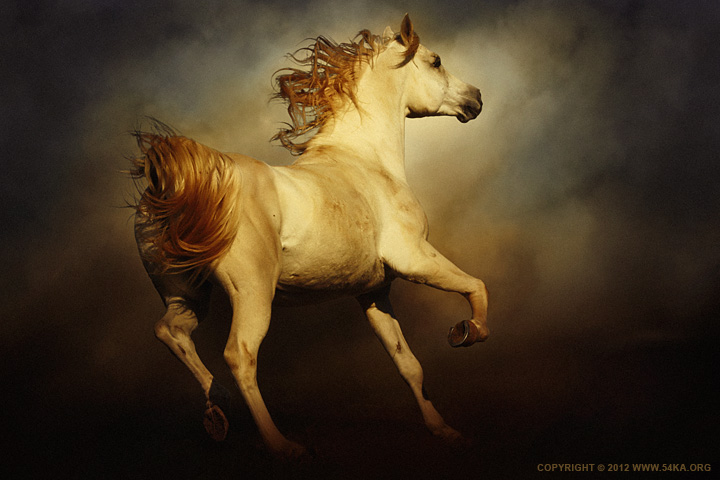 Majestic Horse photography featured equine photography animals  Photo