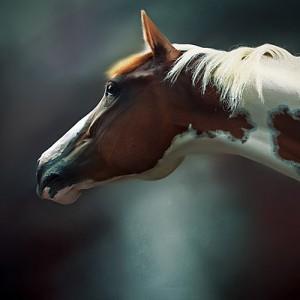 The Horses [backstage video] Episode 2 – Horse Portrait