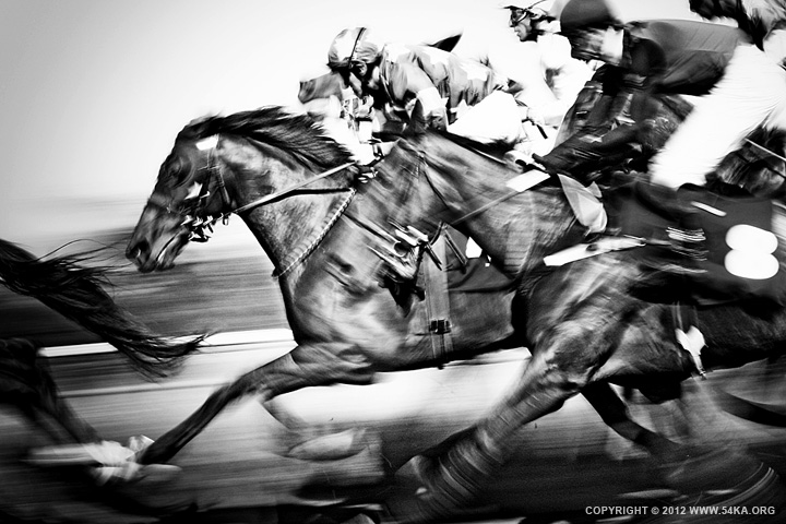 Horse Racing photography animals  Photo