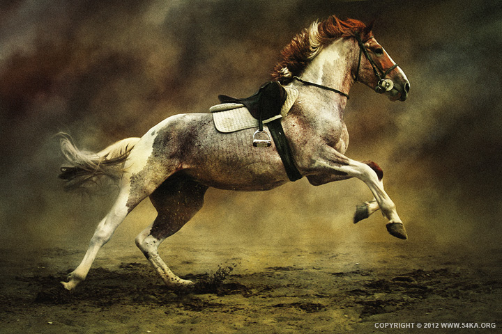 horses XI 01 by 54ka :: Horses XI :: photography photomanipulation index animals