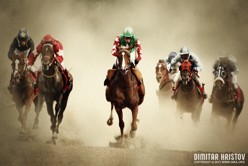 Racing Horses I photography best of animals  Photo