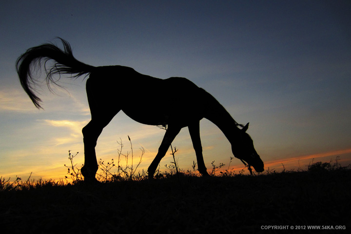 sunset horse 01 by 54ka :: Sunset Horse :: animals