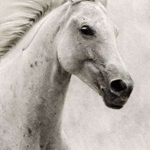 The White Horse II – Equestrian Portrait