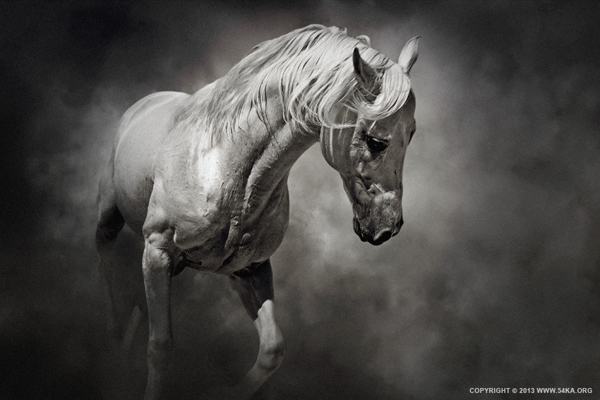 Black and White Horse photography photomanipulation top rated featured equine photography black and white animals  Photo