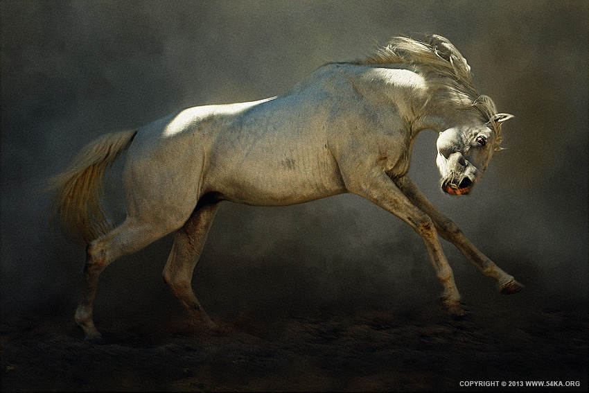 Mad Horse photography photomanipulation featured equine photography animals  Photo