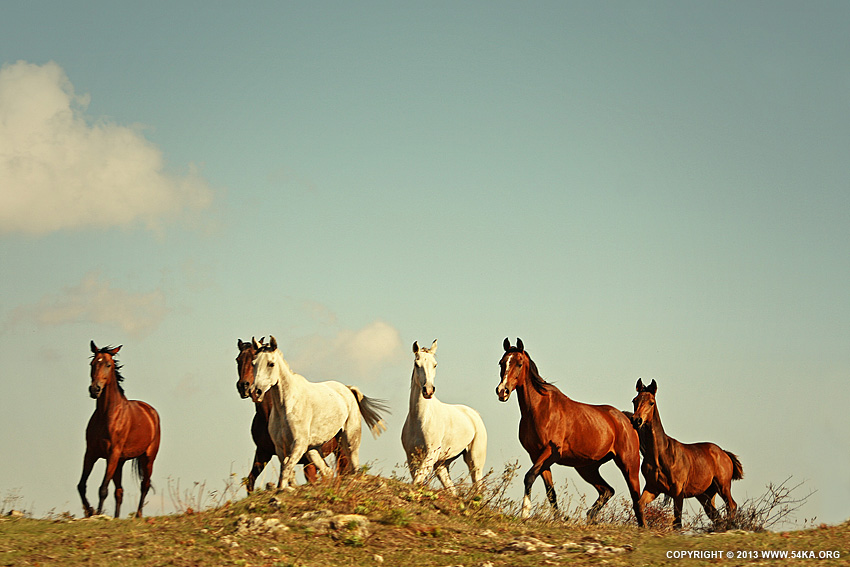 Wild Horses Tabun photography featured equine photography animals  Photo
