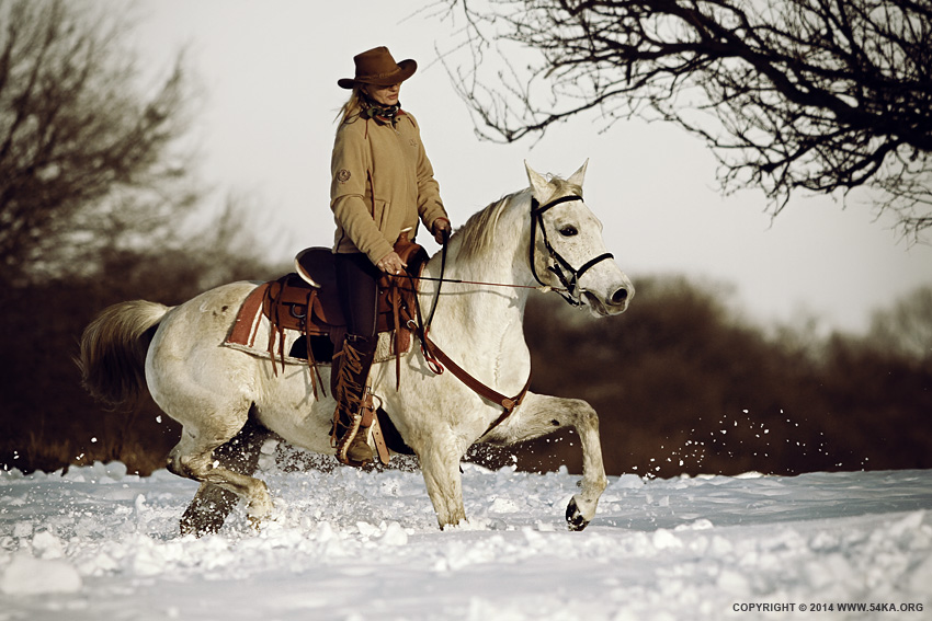 Winter Ride On The White Horse photography featured equine photography animals  Photo