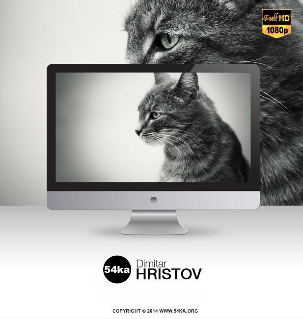 Grey Cat Wallpaper FullHD 1920x1080 wallpapers  Photo