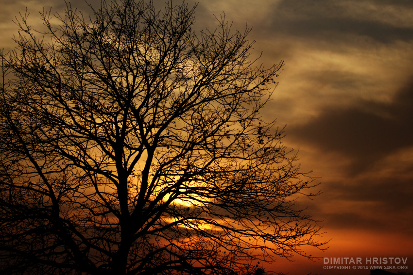 The Sunset Tree photography landscapes featured  Photo