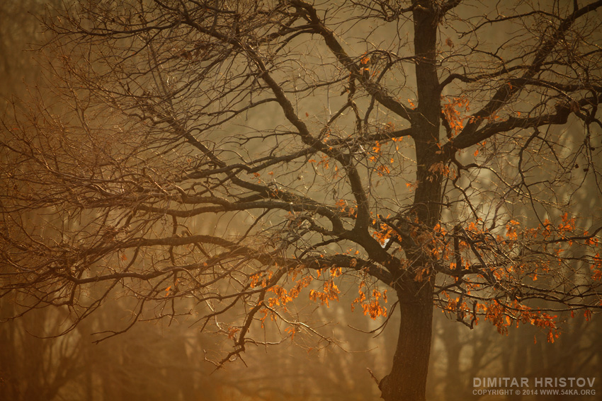 A Walk in The Forest photography landscapes  Photo