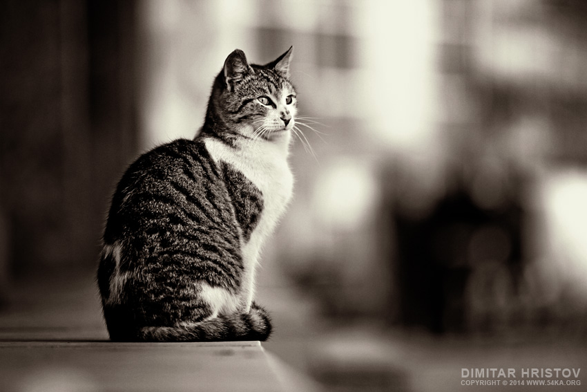 Cute Cat on The Street photography featured black and white animals  Photo