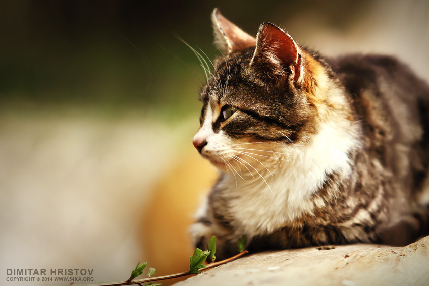 Fluffy Cat photography featured animals  Photo