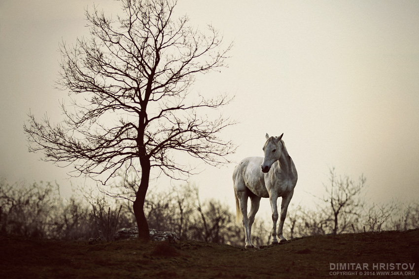 Lonely Horse photography featured equine photography animals  Photo