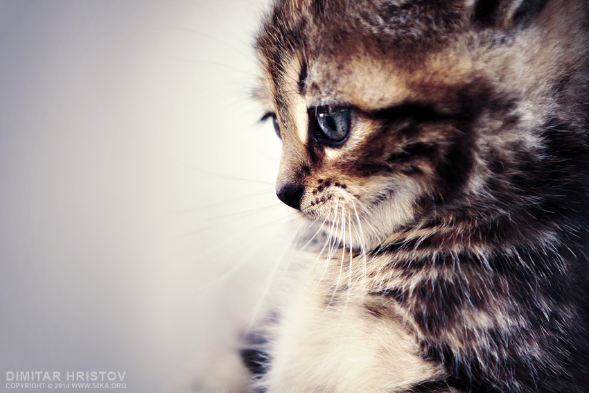 Cute Kitty photography featured animals  Photo