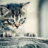Cute kitty looking behind a fence