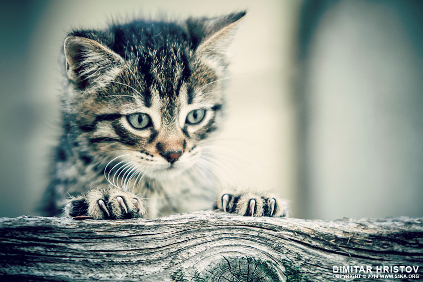 Cute kitty looking behind a fence photography animals  Photo