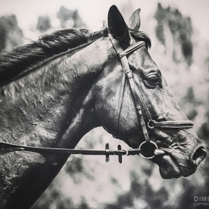 Black and White Horse Art Portrait
