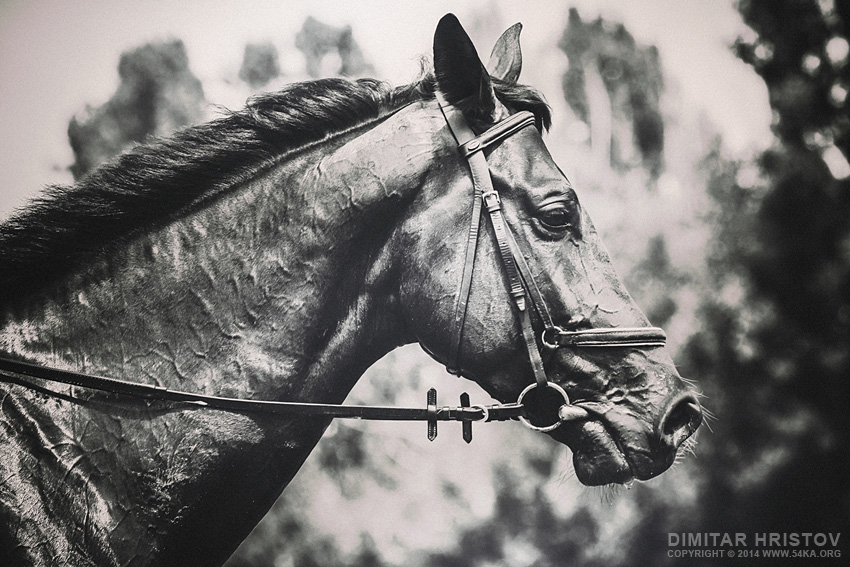 Black and White Horse Art Portrait photography featured equine photography animals  Photo