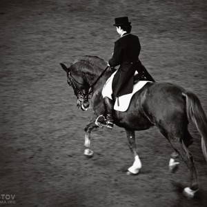 Black Horse Dressage – Equestrian sport