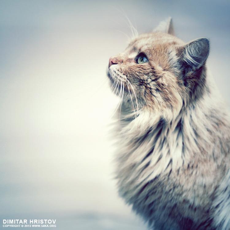 Kitten look photography featured animals  Photo