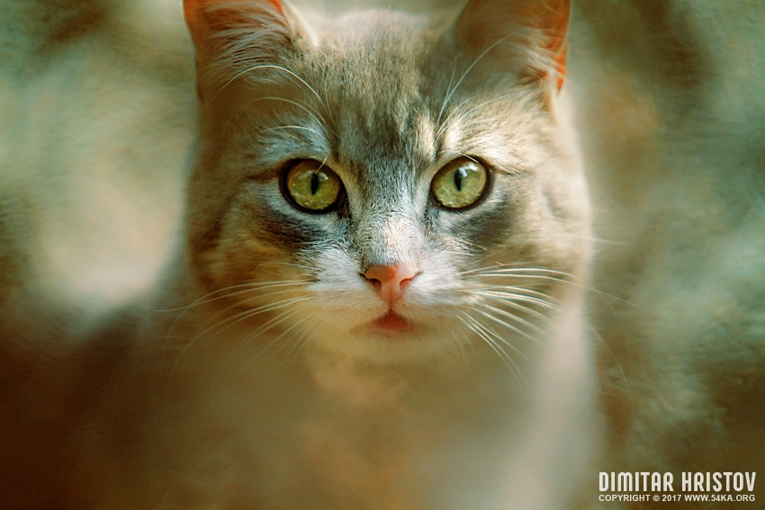 The Cat Eyes photography featured animals  Photo