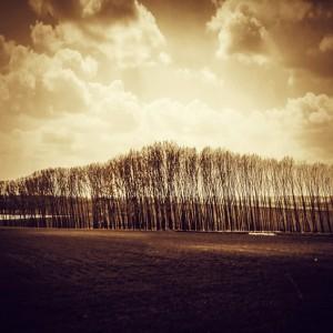 Sunshine Forest Landscape
