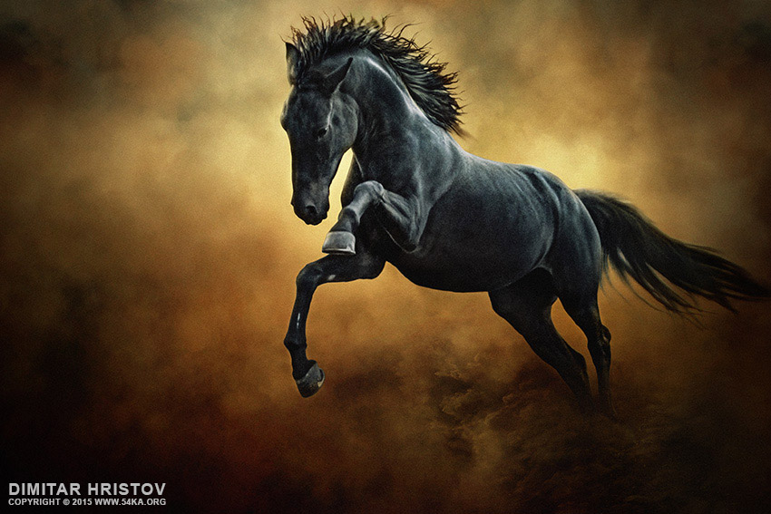 The Black Stallion in Dust photography photomanipulation featured equine photography animals  Photo