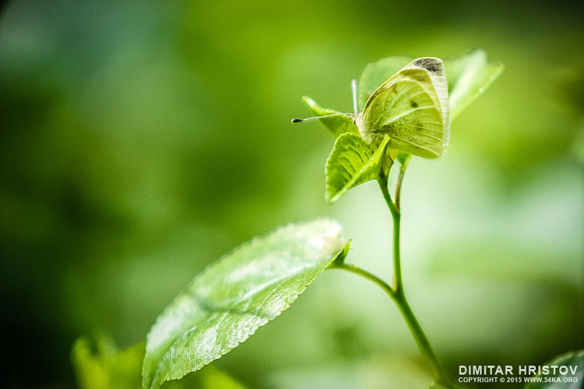 Beautiful Green Butterfly photography macro featured  Photo