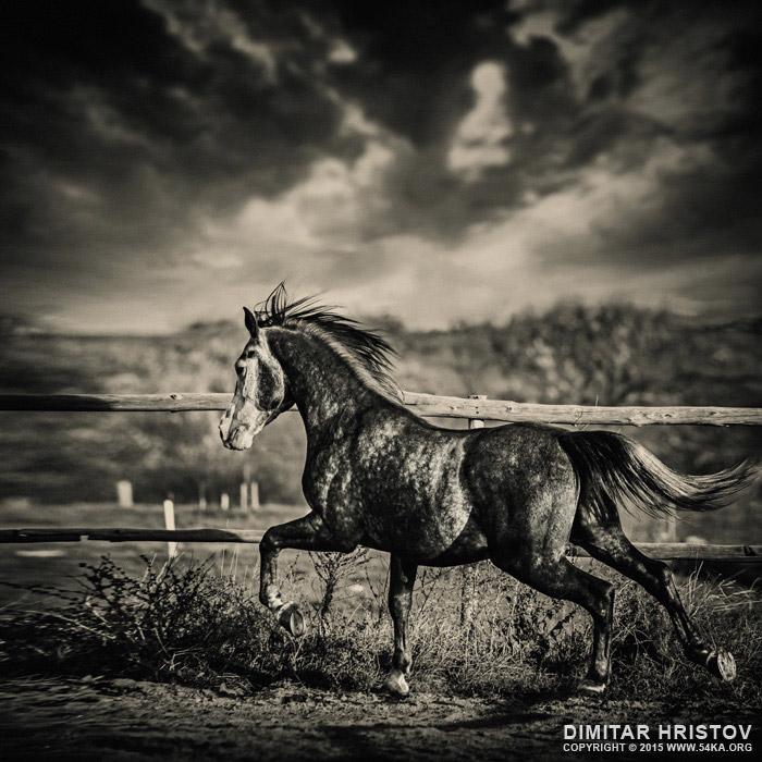 Beautiful stallion running photography featured equine photography animals  Photo